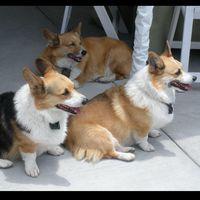 Four Paws Pet Grooming logo