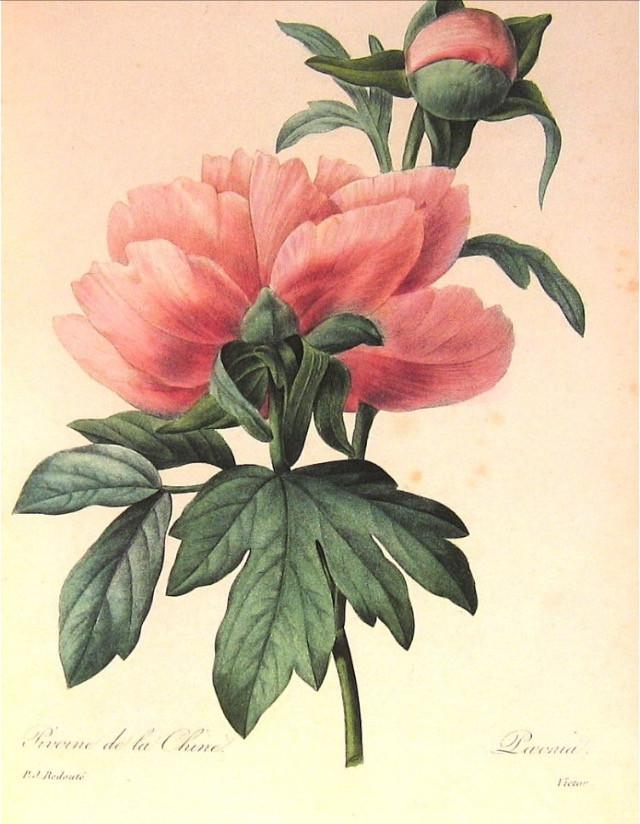 Ojai Blooms logo