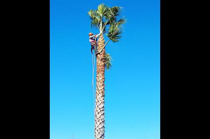 Photo uploaded by Paradise Tree Service