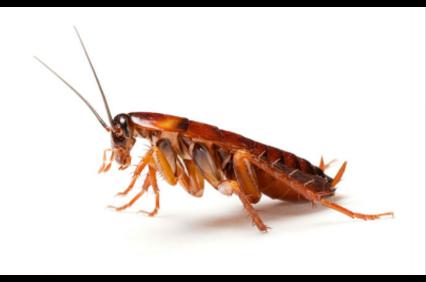 Photo uploaded by Key Termite & Pest Control Inc